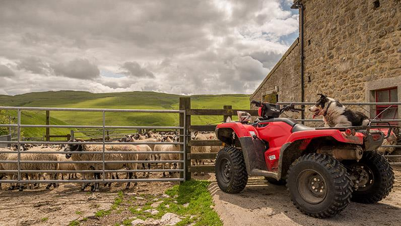 Dog sitting on red quad bike on a sheep farm